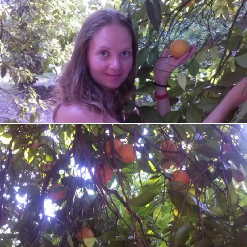 апельсиновый сад в сиде